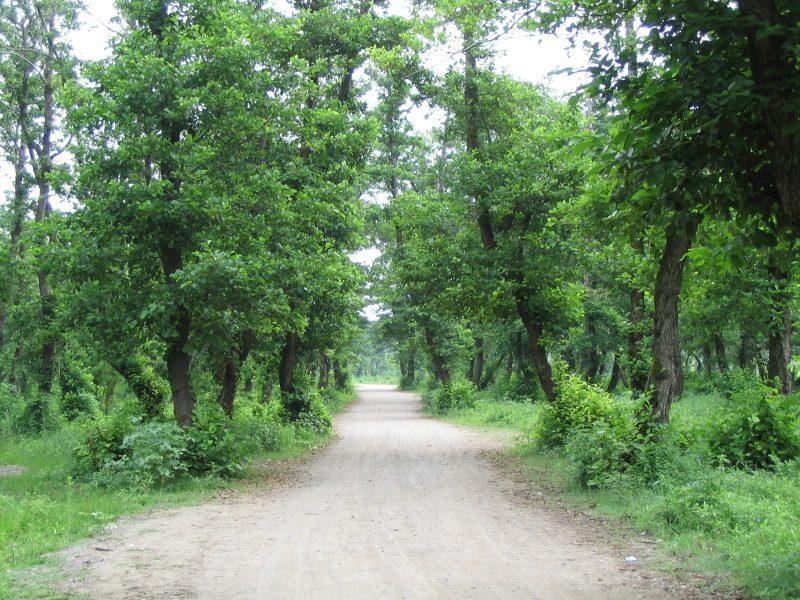پارک پارک جنگلی کیاشهر