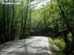 حفاظت، اصلی ترین سیاست اجرایی سازمان جنگل ها