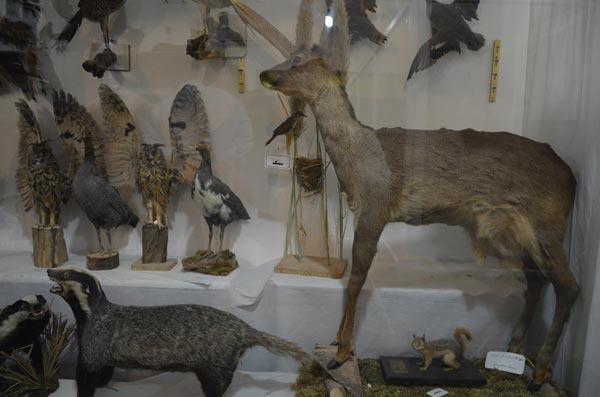 موزه علوم طبیعی بهاباد