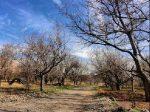روستای علی آباد یزد