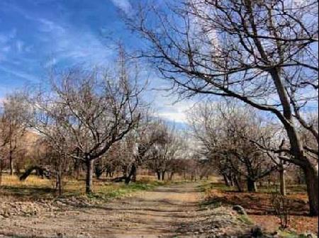 190 روستای علی آباد یزد