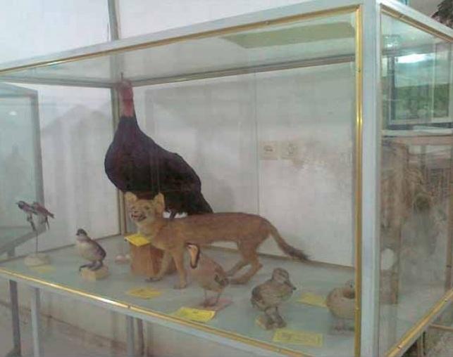 84 موزه مردم شناسی اردکان