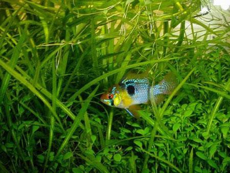 aquarium-kish-island2 آکواریوم جزیره کیش