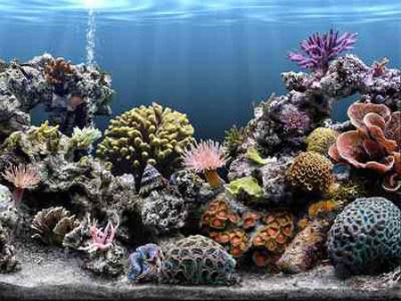 aquarium-kish-island3 آکواریوم جزیره کیش