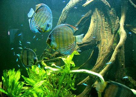 aquarium-kish-island4 آکواریوم جزیره کیش