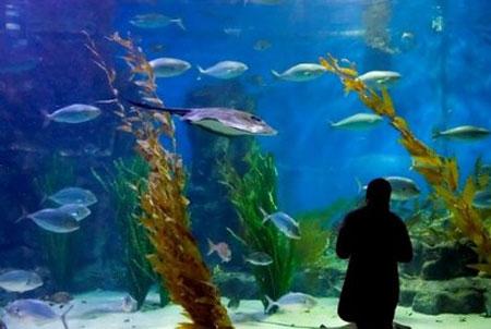 aquarium-kish-island5 آکواریوم جزیره کیش