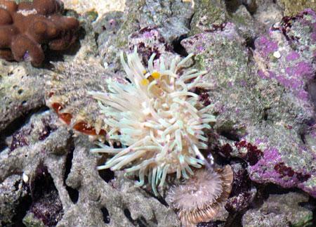 aquarium-kish-island6 آکواریوم جزیره کیش