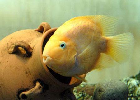 aquarium-kish-island7 آکواریوم جزیره کیش
