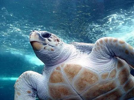 aquarium-kish-island8 آکواریوم جزیره کیش