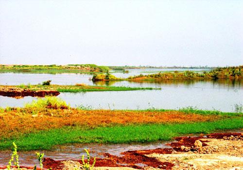 bamdezh wetland