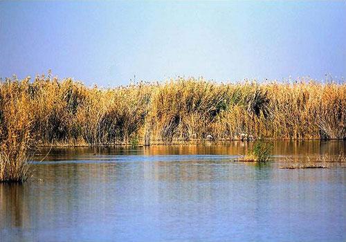 bamdezh wetland2