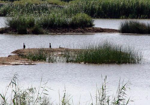 bamdezh wetland3