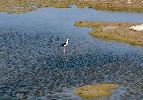 bamdezh wetland4