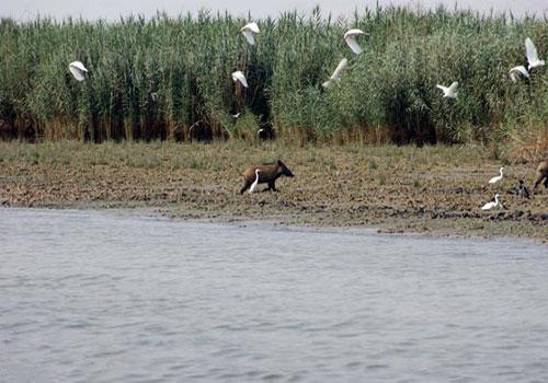 bamdezh wetland5