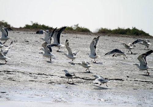 bamdezh wetland6