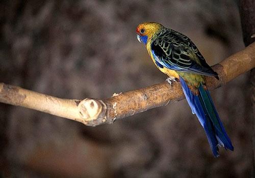 باغ پرندگان صدف12 باغ پرندگان صدف کرمانشاه