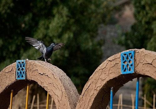 باغ-پرندگان-صدف13