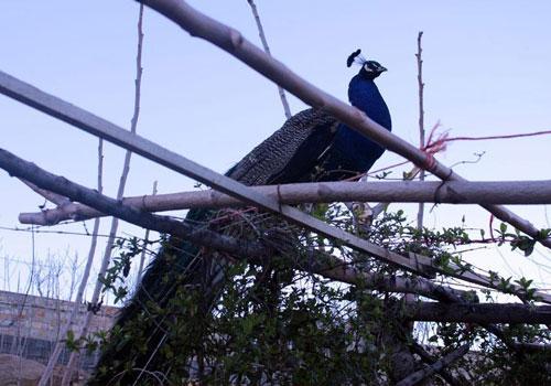 باغ پرندگان صدف24 باغ پرندگان صدف کرمانشاه