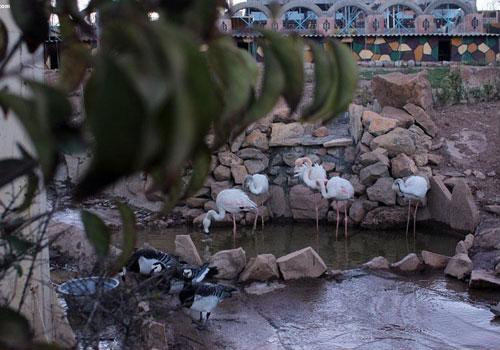 باغ پرندگان صدف25 باغ پرندگان صدف کرمانشاه