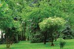 باغ موزه سعدآباد