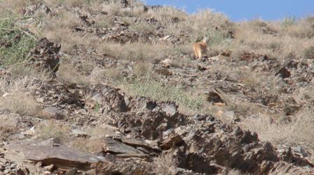 1_12 منطقه شکار ممنوع خارو