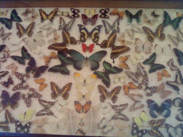 24 موزه برادران امیدوار سعدآباد
