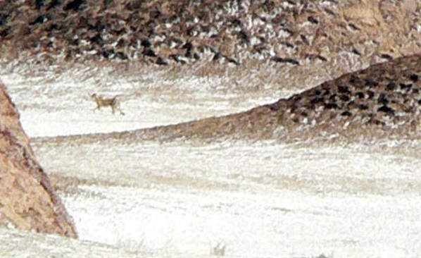 34 منطقه حفاظت شده دربند راور