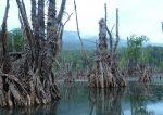 دریاچه ملا کلا