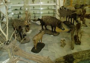 118 موزه جانور شناسی رشت