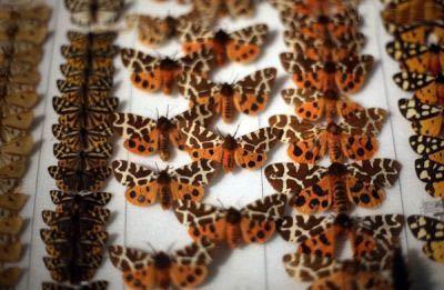 119 موزه جانور شناسی رشت