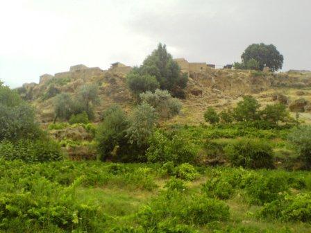 تپه دارکانی