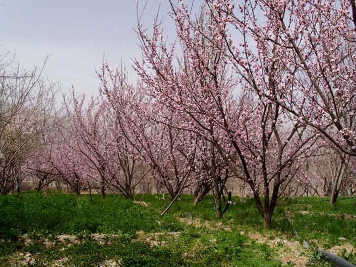 روستای سیرچ