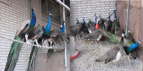 24 کبوتر خانه های بناب