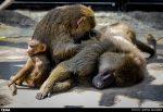 نگهداری 157 حیوان در باغ وحش «کاسیت» خرمآباد