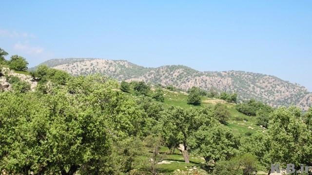 1572 روستای گزدون