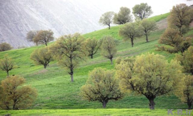 1574 روستای گزدون