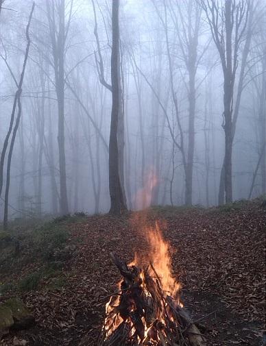 جنگل مه آلود پاسند