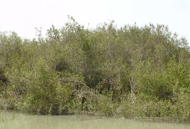 1734 منطقه شکار ممنوع پزم