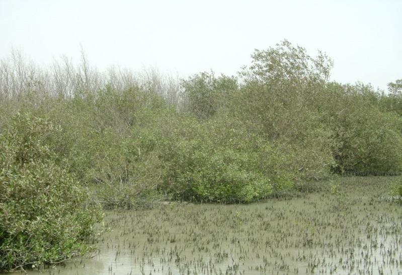 1736 منطقه شکار ممنوع پزم