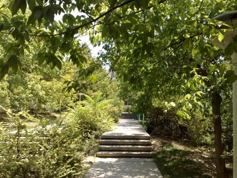 1804 پارک جنگلی افرا
