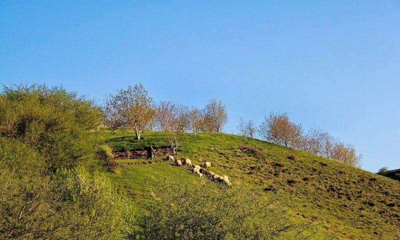 5 جنگل میر آباد