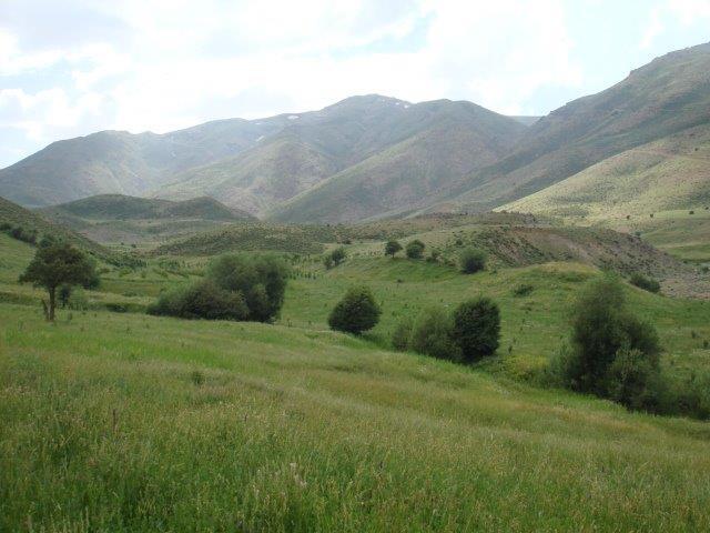 6 جنگل میر آباد