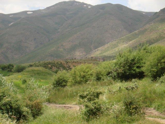 8 جنگل میر آباد