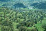 کاشت ۱۰ هزار اصله درخت میوه در پارک جنگلی مخملکوه