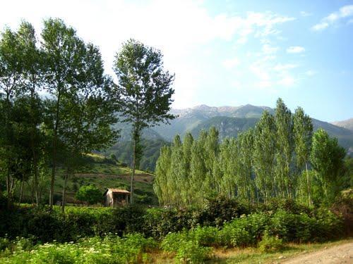 2492 روستای زیارت