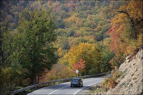 2512 جنگل توسکستان