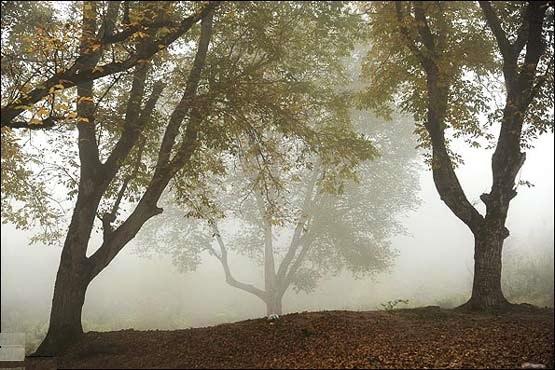 2513 جنگل توسکستان