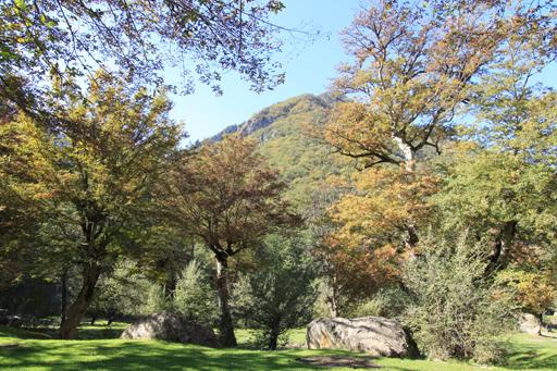 2514 جنگل توسکستان