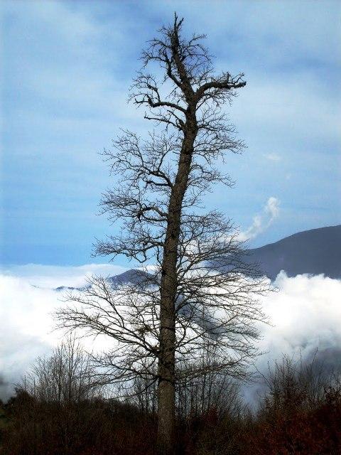 2515 جنگل توسکستان