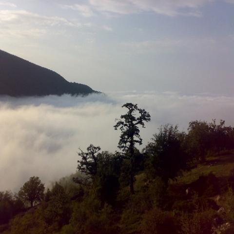 2519 جنگل توسکستان